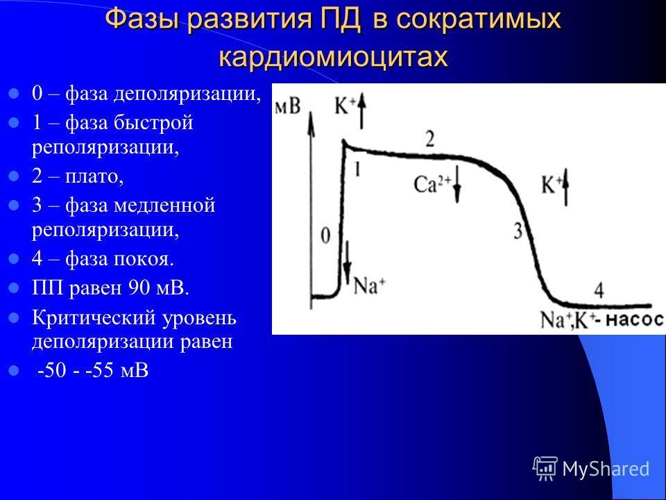 Фазы развития ПД в сократимых кардиомиоцитах 0 – фаза деполяризации, 1 – фаза быстрой реполяризации, 2 – плато, 3 – фаза медленной реполяризации, 4 – фаза покоя. ПП равен 90 мВ. Критический уровень деполяризации равен -50 - -55 мВ