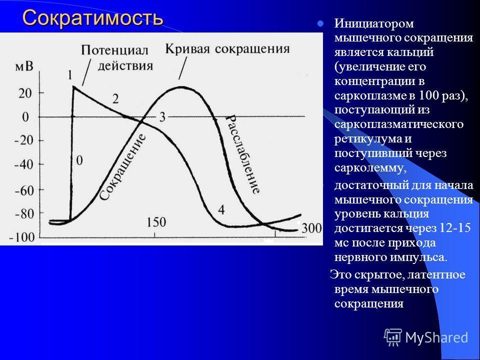 Сократимость Инициатором мышечного сокращения является кальций (увеличение его концентрации в саркоплазме в 100 раз), поступающий из саркоплазматического ретикулума и поступивший через сарколемму, достаточный для начала мышечного сокращения уровень к