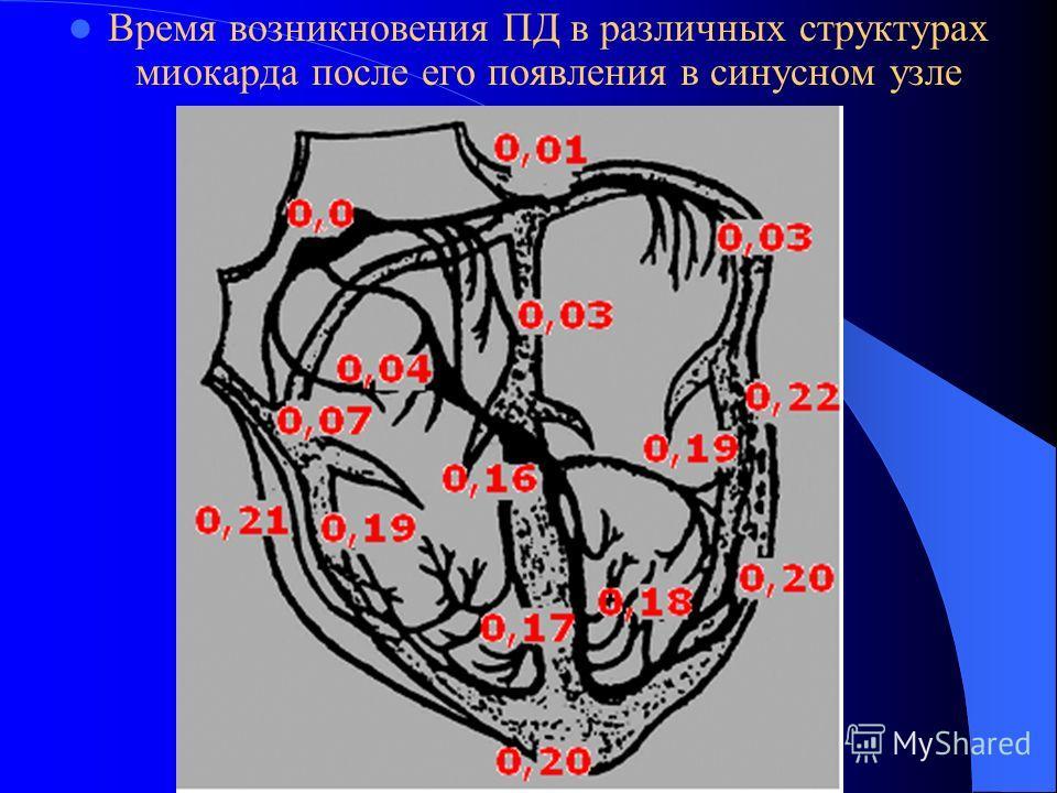 Время возникновения ПД в различных структурах миокарда после его появления в синусном узле