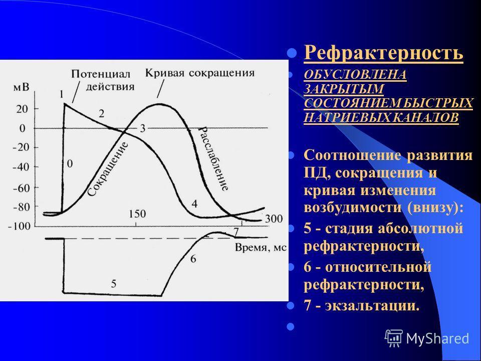 Рефрактерность ОБУСЛОВЛЕНА ЗАКРЫТЫМ СОСТОЯНИЕМ БЫСТРЫХ НАТРИЕВЫХ КАНАЛОВ Соотношение развития ПД, сокращения и кривая изменения возбудимости (внизу): 5 - стадия абсолютной рефрактерности, 6 - относительной рефрактерности, 7 - экзальтации.