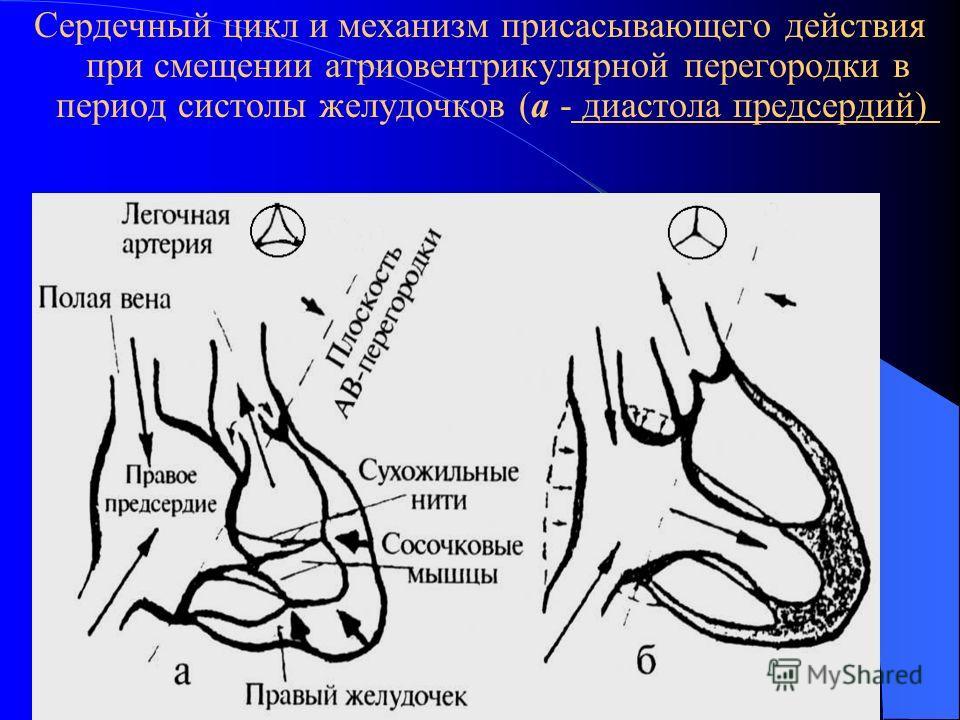 Сердечный цикл и механизм присасывающего действия при смещении атриовентрикулярной перегородки в период систолы желудочков (а - диастола предсердий)