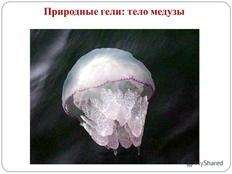 Природные гели: тело медузы