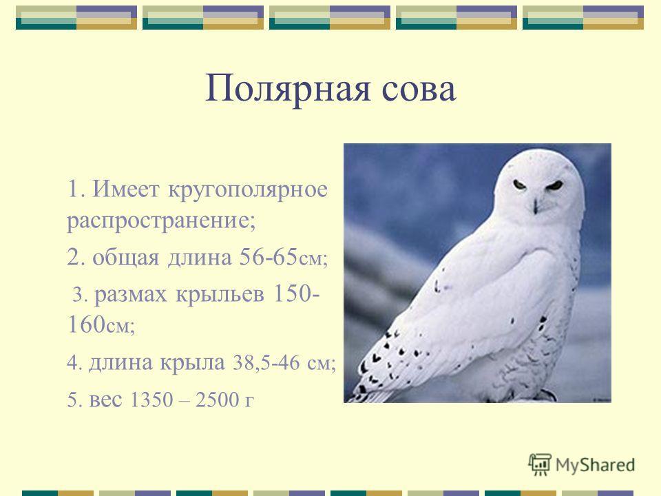 Полярная сова 1. Имеет кругополярное распространение; 2. общая длина 56-65 см; 3. размах крыльев 150- 160 см; 4. длина крыла 38,5-46 см; 5. вес 1350 – 2500 г