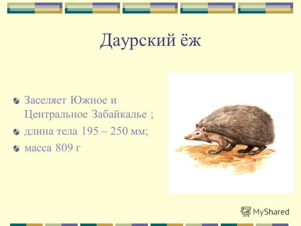 Даурский ёж Заселяет Южное и Центральное Забайкалье ; длина тела 195 – 250 мм; масса 809 г