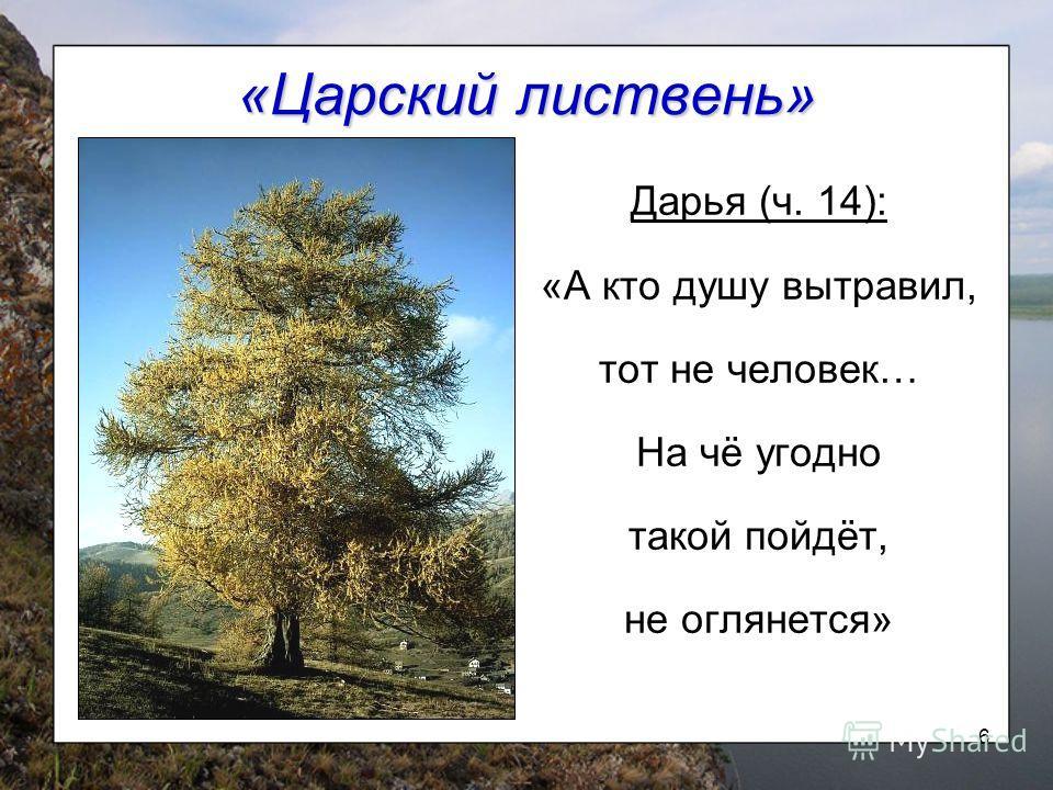 6 «Царский листвень» Дарья (ч. 14): «А кто душу вытравил, тот не человек… На чё угодно такой пойдёт, не оглянется»
