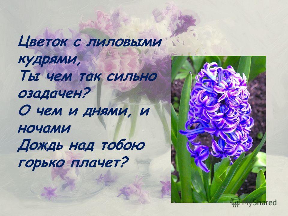 Цветок с лиловыми кудрями, Ты чем так сильно озадачен? О чем и днями, и ночами Дождь над тобою горько плачет?