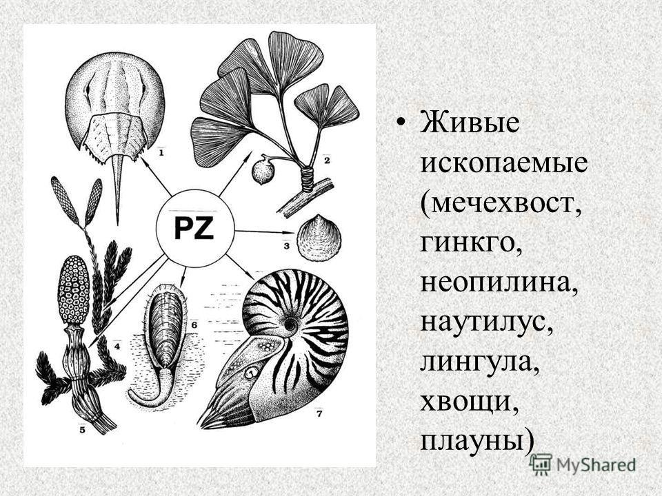 Живые ископаемые (мечехвост, гинкго, неопилина, наутилус, лингала, хвощи, плауны)