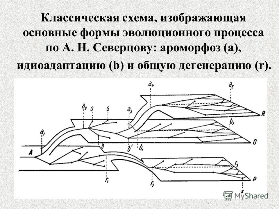 Классическая схема, изображающая основные формы эволюционного процесса по А. Н. Северцову: ароморфоз (a), идиоадаптацию (b) и общую дегенерацию (r).