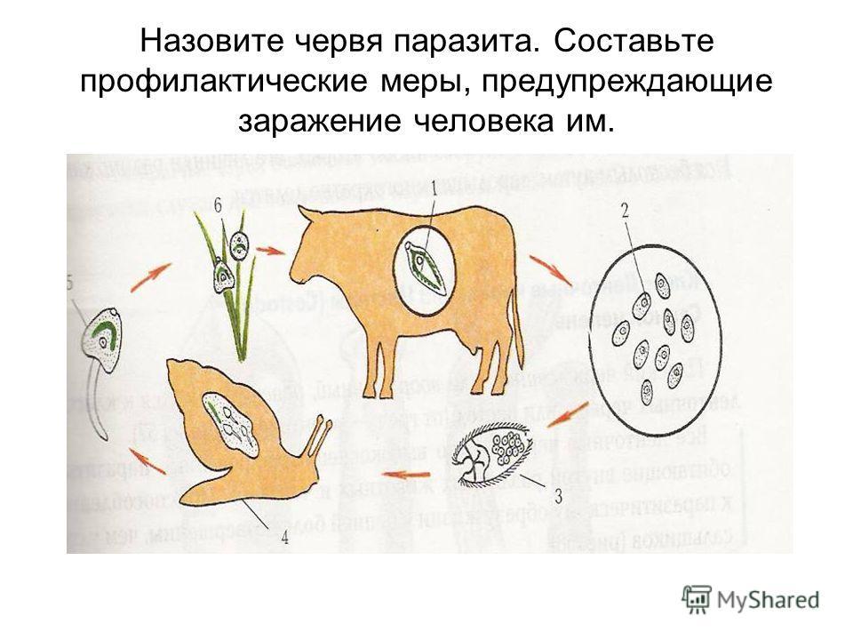 Назовите червя паразита. Составьте профилактические меры, предупреждающие заражение человека им.