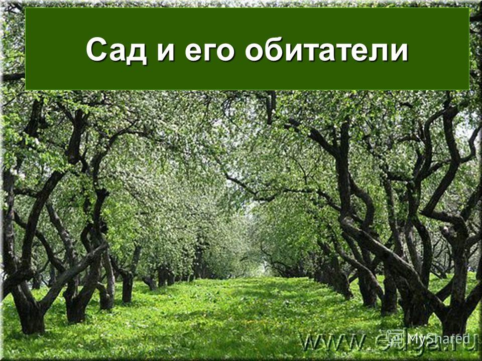 Сад и его обитатели