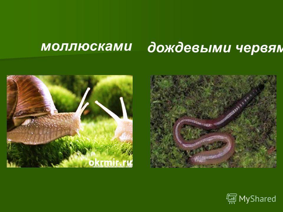 моллюсками дождевыми червями