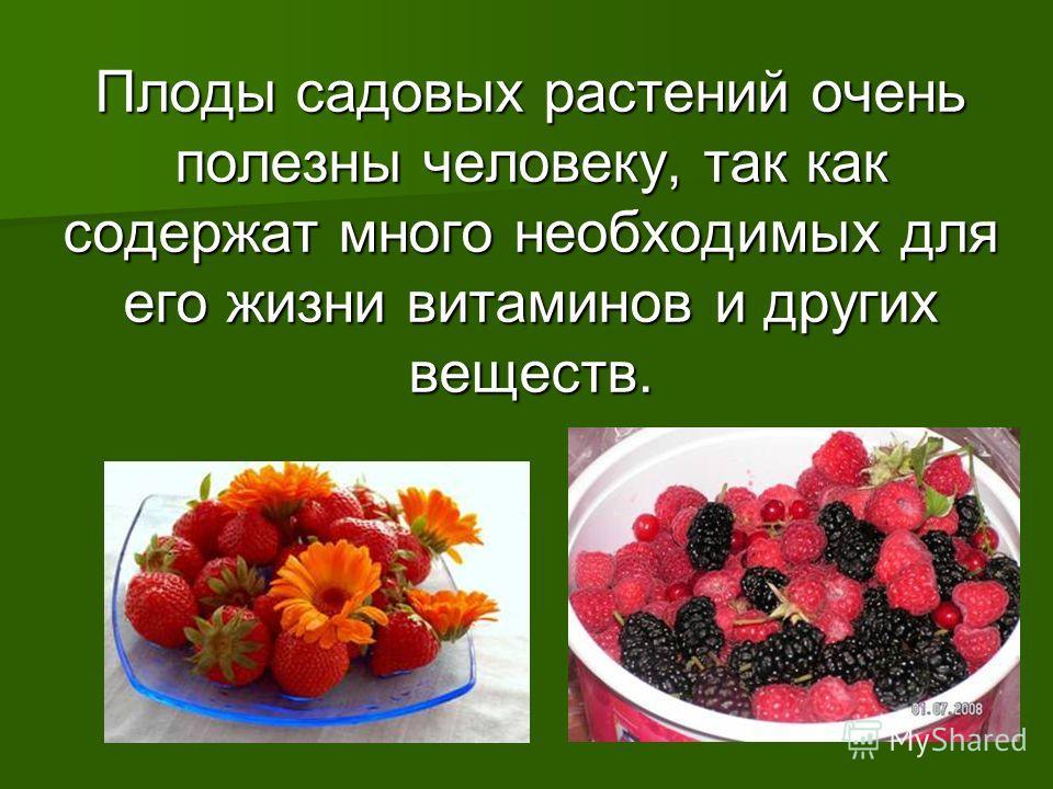 Плоды садовых растений очень полезны человеку, так как содержат много необходимых для его жизни витаминов и других веществ.