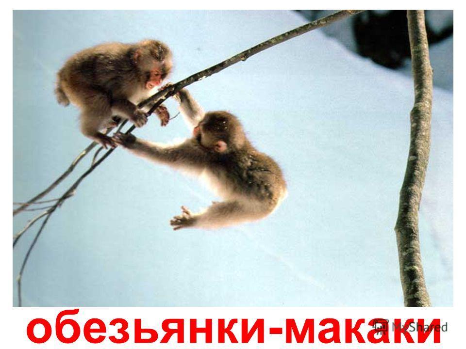 орангутанг с малышом