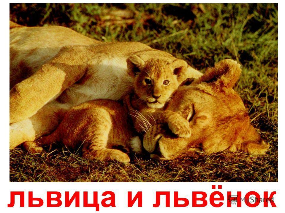 лемуры с детенышем