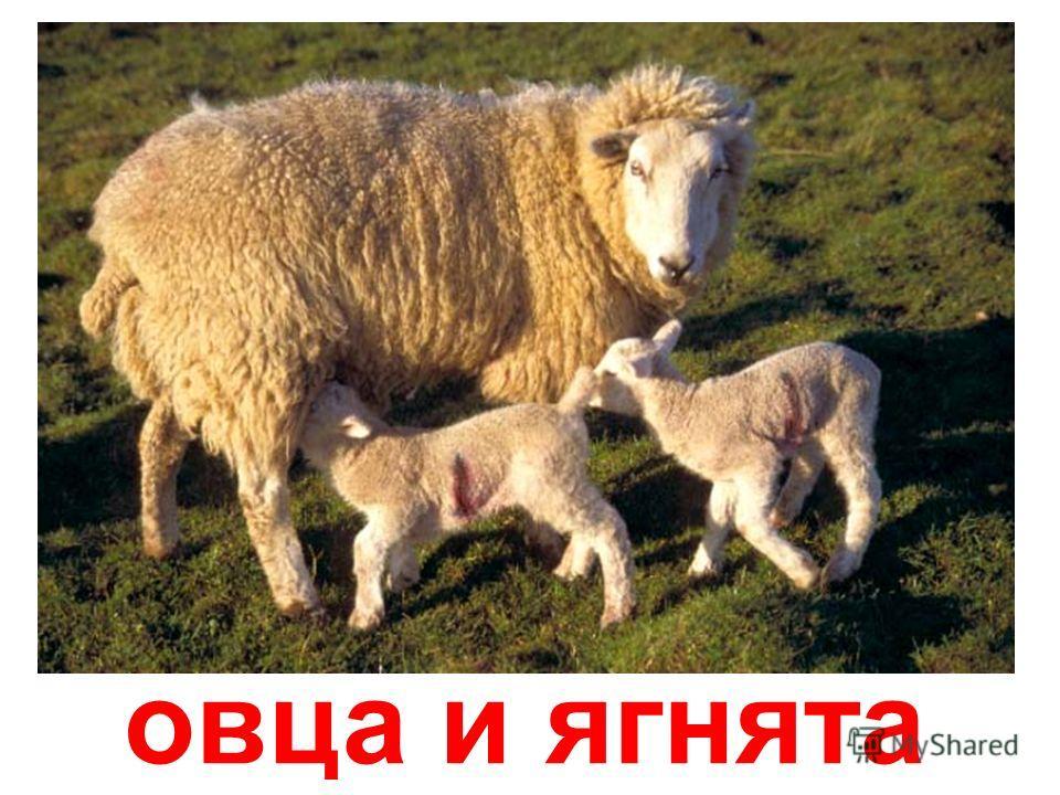 лошадь и новорожденный жеребёнок