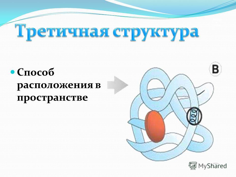 Третична я структура Способ расположения в пространстве