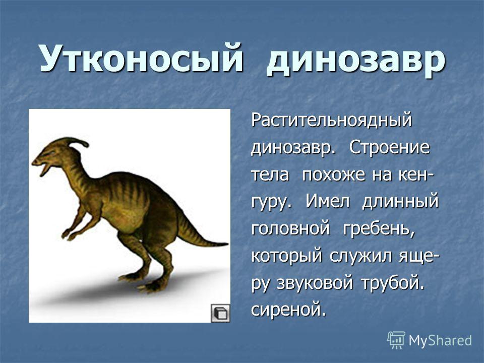 Утконосый динозавр Растительноядный динозавр. Строение тела похоже на кен- гуру. Имел длинный головной гребень, который служил еще- ру звуковой трубой. сиреной.