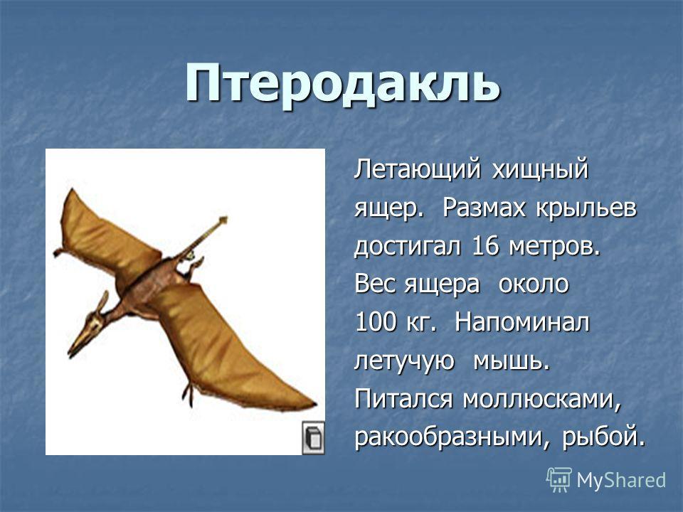 Птеродакль Летающий хищный ещер. Размах крыльев достигал 16 метров. Вес ещера около 100 кг. Напоминал летучую мышь. Питался моллюсками, ракообразными, рыбой.