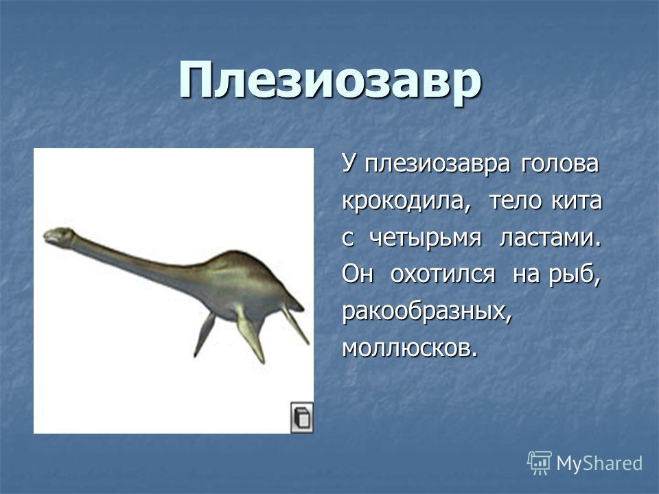 Плезиозавр У плезиозавра голова крокодила, тело кита с четырьмя ластами. Он охотился на рыб, ракообразных,моллюсков.