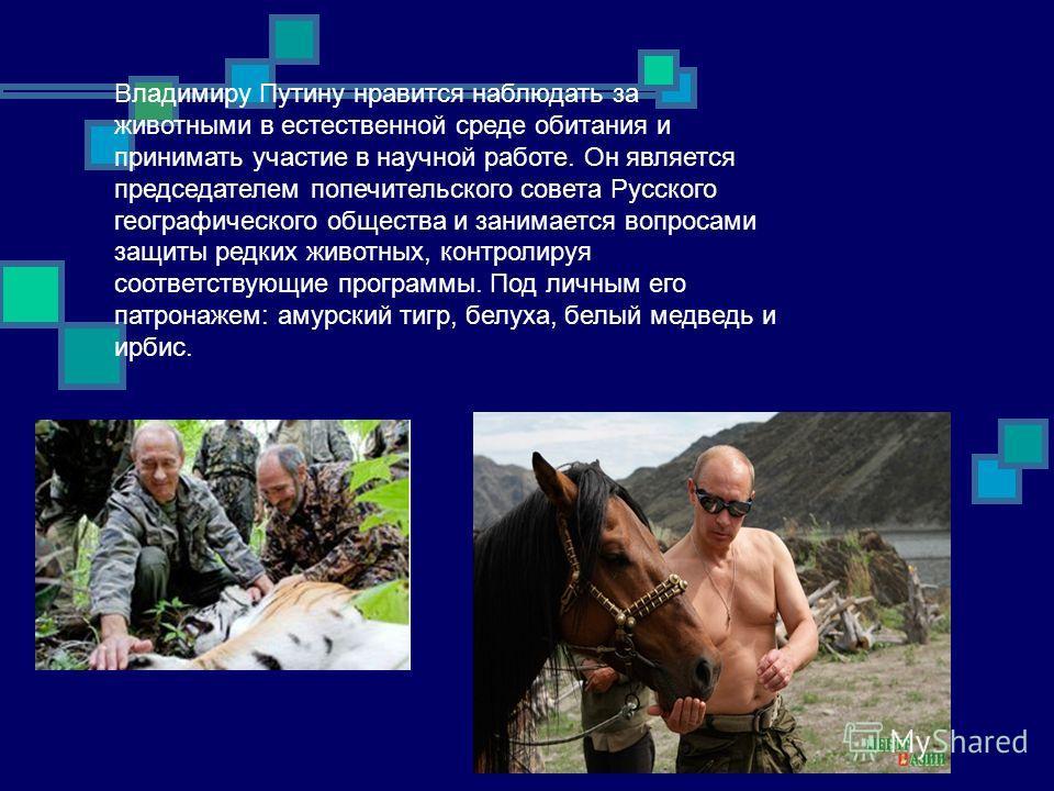 Владимиру Путину нравится наблюдать за животными в естественной среде обитания и принимать участие в научной работе. Он является председателем попечительского совета Русского географического общества и занимается вопросами защиты редких животных, кон