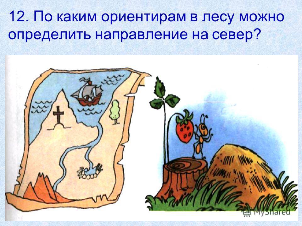 12. По каким ориентирам в лесу можно определить направление на север?
