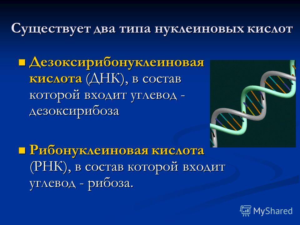Существует два типа нуклеиновых кислот Существует два типа нуклеиновых кислот Дезоксирибонуклеиновая кислота (ДНК), в состав которой входит углевод - дезоксирибоза Дезоксирибонуклеиновая кислота (ДНК), в состав которой входит углевод - дезоксирибоза
