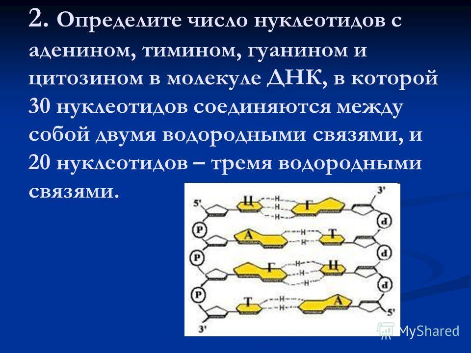 2. Определите число нуклеотидов с аденином, тимином, гуанином и цитозином в молекуле ДНК, в которой 30 нуклеотидов соединяются между собой двамя водородными связями, и 20 нуклеотидов – тремя водородными связями.