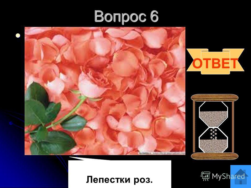 Вопрос 5 Блиц Как называются пластиды зеленого цвета? Как называются пластиды зеленого цвета? Как называется плод гороха? Как называется плод гороха? Сколько шейных позвонков у жирафа? Сколько шейных позвонков у жирафа? ОТВЕТ Семь Хлоропласты. Боб
