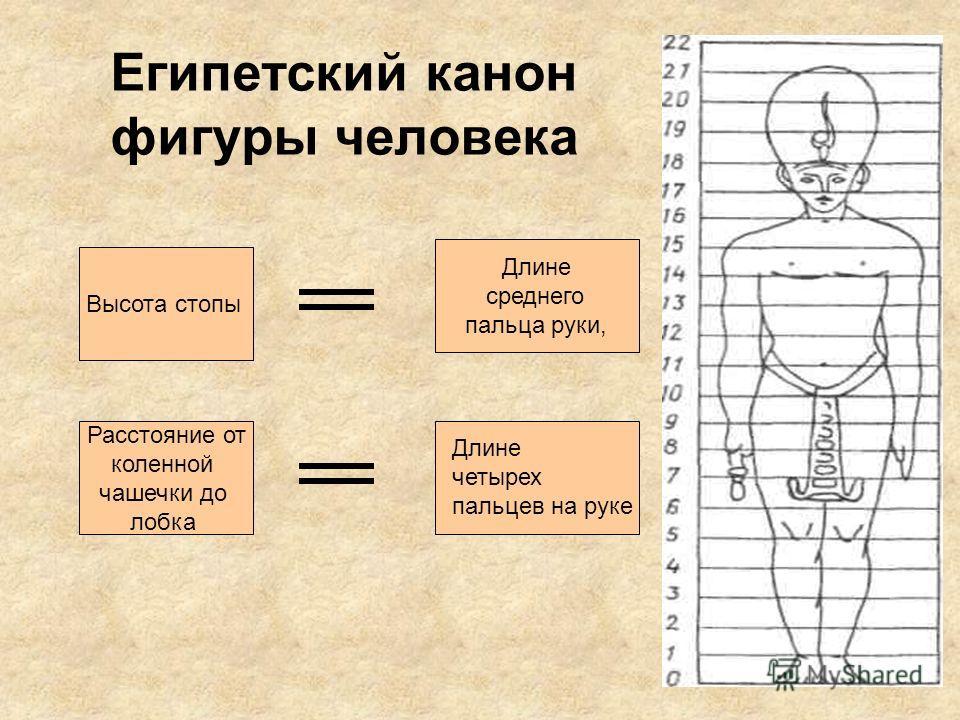 Египетский канон фигуры человека Высота стопы Длине среднего пальца руки, Расстояние от коленной чашечки до лобка Длине четырех пальцев на руке