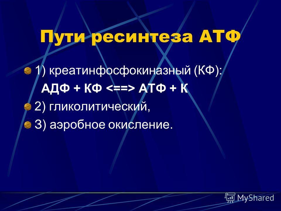 Пути ресинтеза АТФ 1) креатинфосфокиназный (КФ): АДФ + КФ АТФ + К 2) гликолитический, З) аэробное окисление.