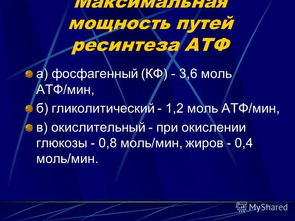 Максимальная мощность путей ресинтеза АТФ а) фосфагенный (КФ) - 3,6 моль АТФ/мин, б) гликолитический - 1,2 моль АТФ/мин, в) окислительный - при окислении глюкозы - 0,8 моль/мин, жиров - 0,4 моль/мин.
