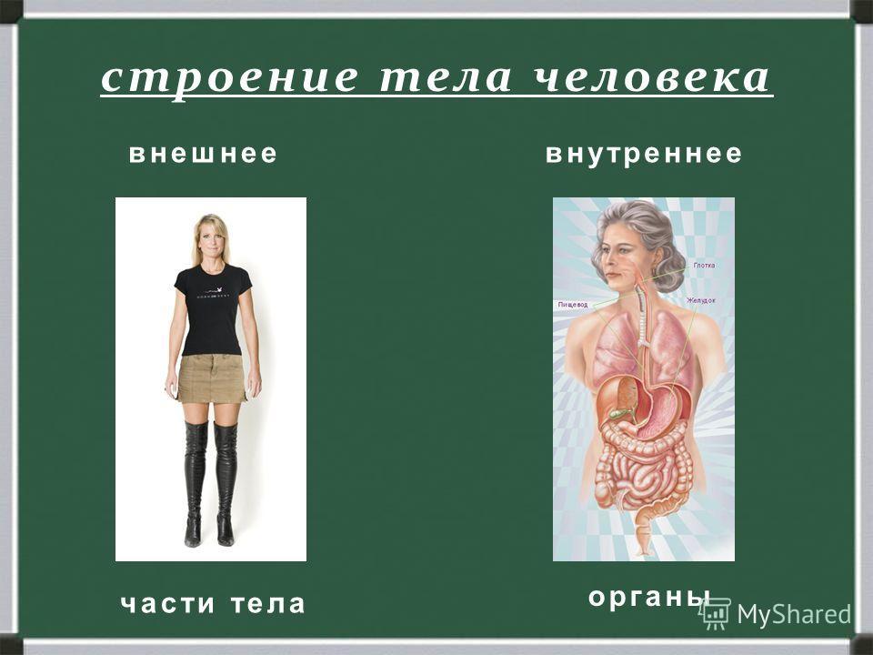 Человек. Строение тела человека. внешнее внутреннее строение тела человека части тела органы внешнее внутреннее
