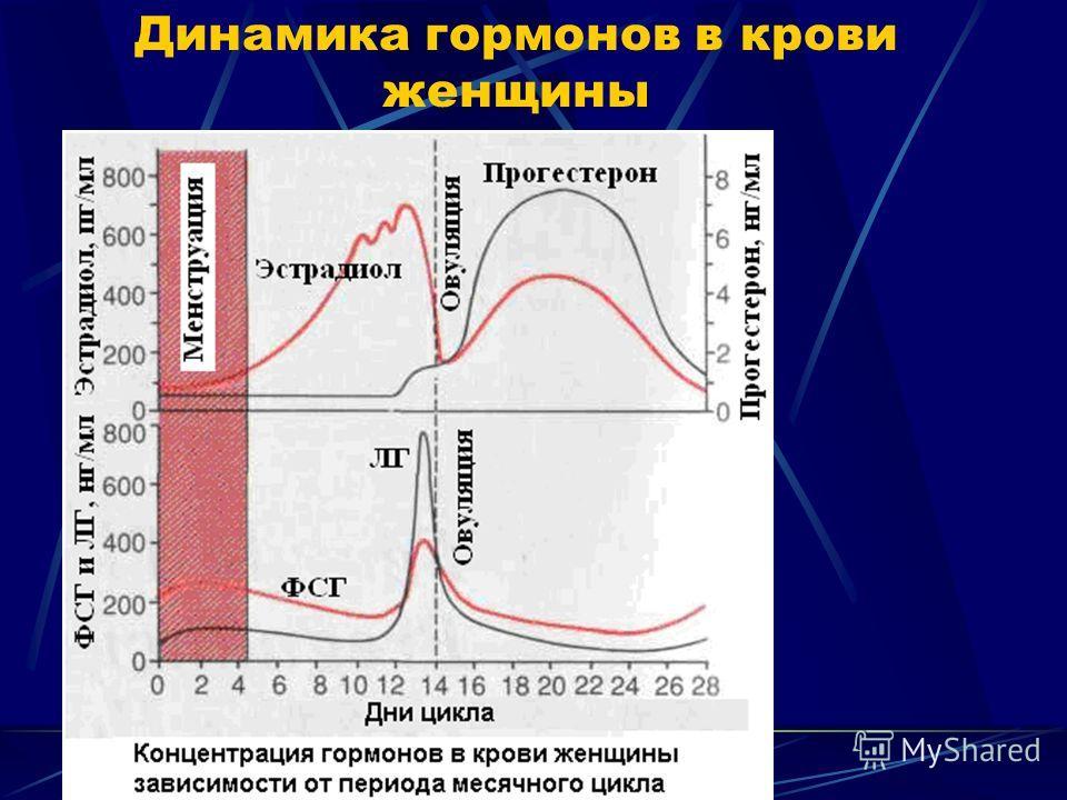 Динамика гормонов в крови женщины
