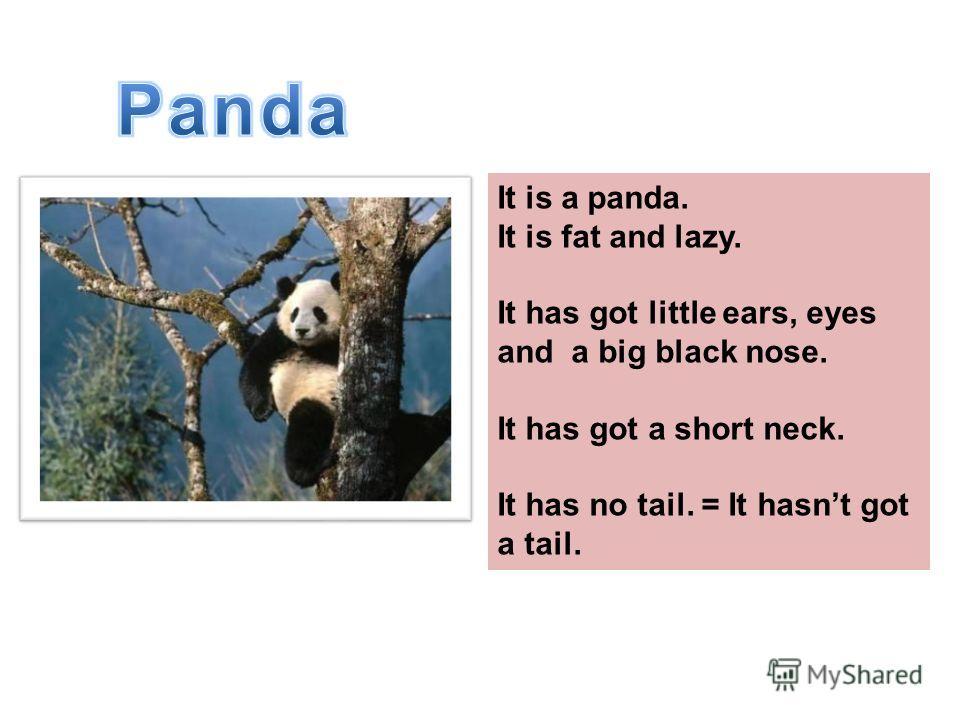 Это панда. Она толстая и ленивая. Она имеет маленькие черные ушки, глаза и нос. У неё короткая шея. У неё нет хвоста. It is a panda. It is fat and lazy. It has got little ears, eyes and a big black nose. It has got a short neck. It has no tail. = It