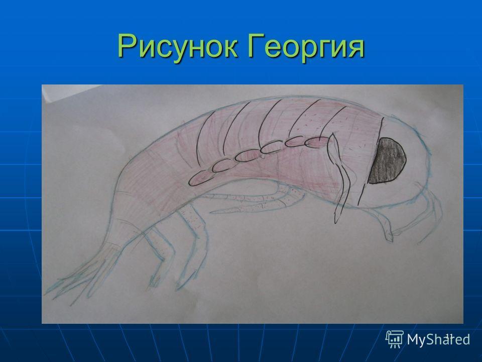 Рисунок Георгия 11