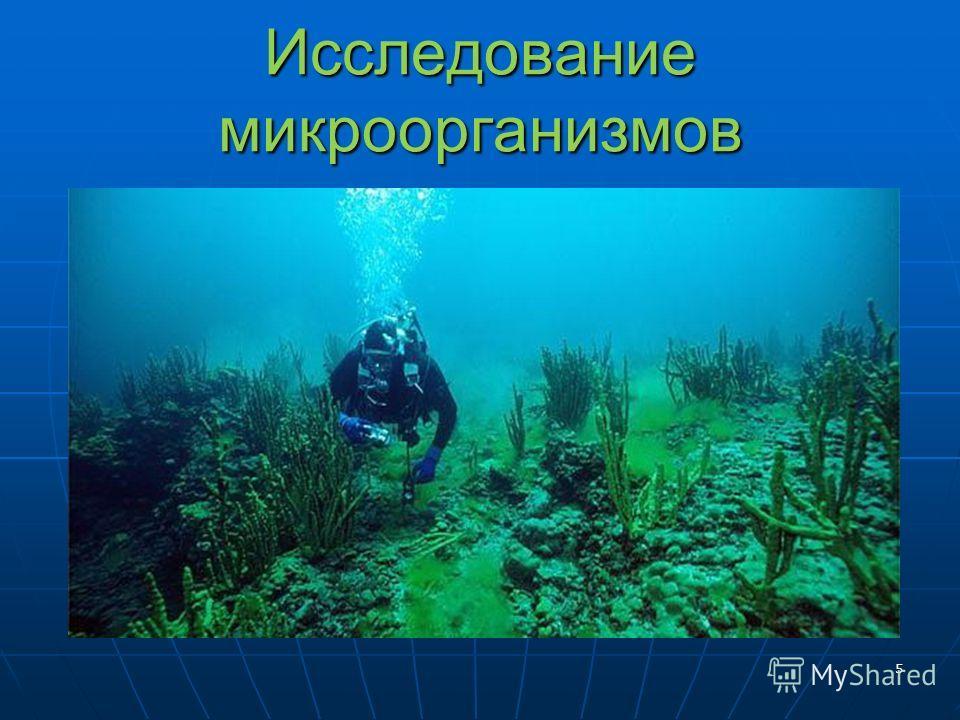 Исследование микроорганизмов 5