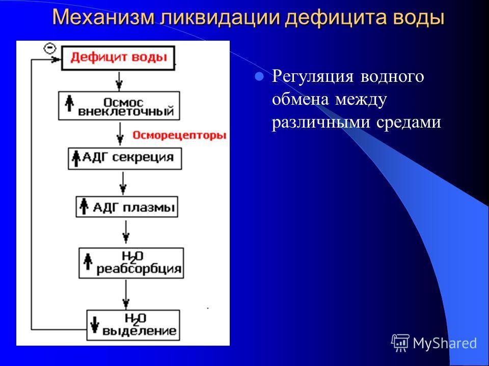 Механизм ликвидации дефицита воды Регуляция водного обмена между различными средами