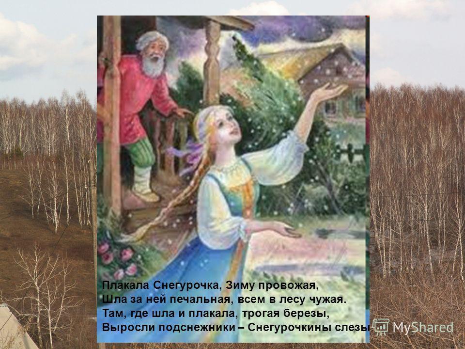 Плакала Снегурочка, Зиму провожая, Шла за ней печальная, всем в лесу чужая. Там, где шла и плакала, трогая березы, Выросли подснежники – Снегурочкины слезы.