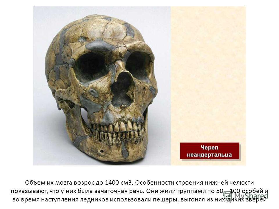 Объем их мозга возрос до 1400 см 3. Особенности строения нижней челюсти показывают, что у них была зачаточная речь. Они жили группами по 50100 особей и во время наступления ледников использовали пещеры, выгоняя из них диких зверей