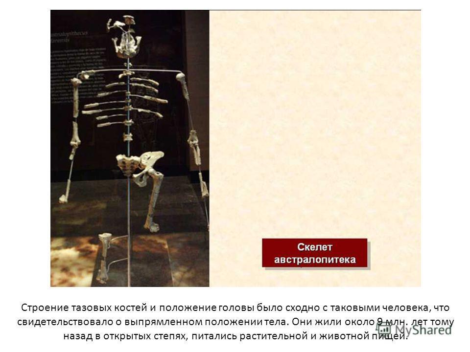 Строение тазовых костей и положение головы было сходно с таковыми человека, что свидетельствовало о выпрямленном положении тела. Они жили около 9 млн. лет тому назад в открытых степях, питались растительной и животной пищей.
