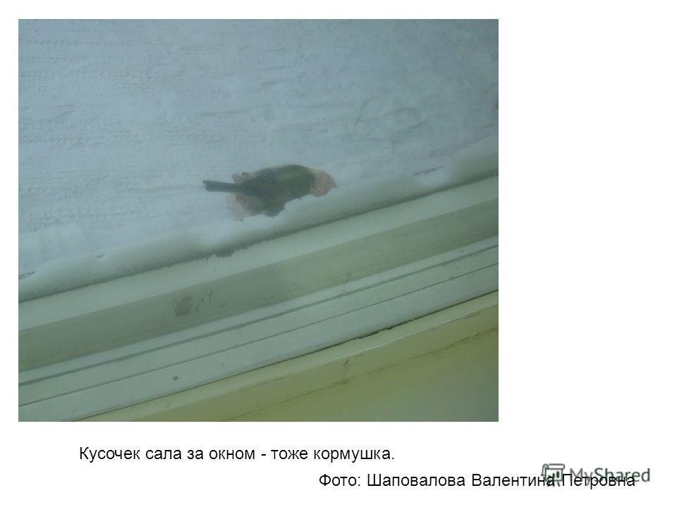 Кусочек сала за окном - тоже кормушка. Фото: Шаповалова Валентина Петровна