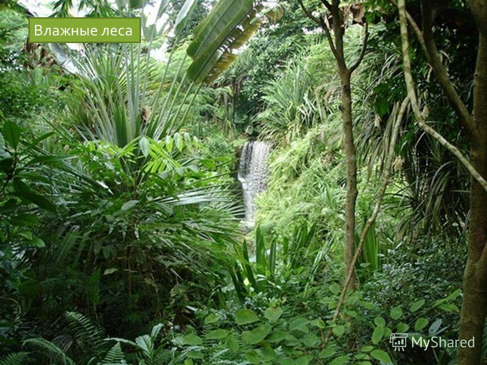 Влажные леса