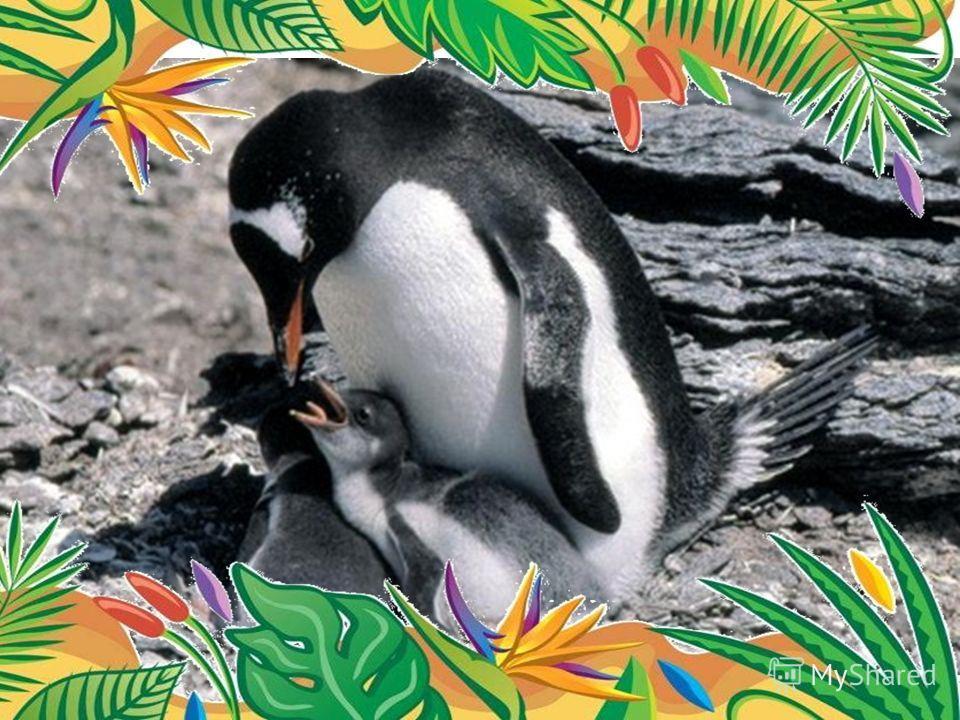 Самый быстрый пловец - папуасский пингвин. скорость 27 км/ч.