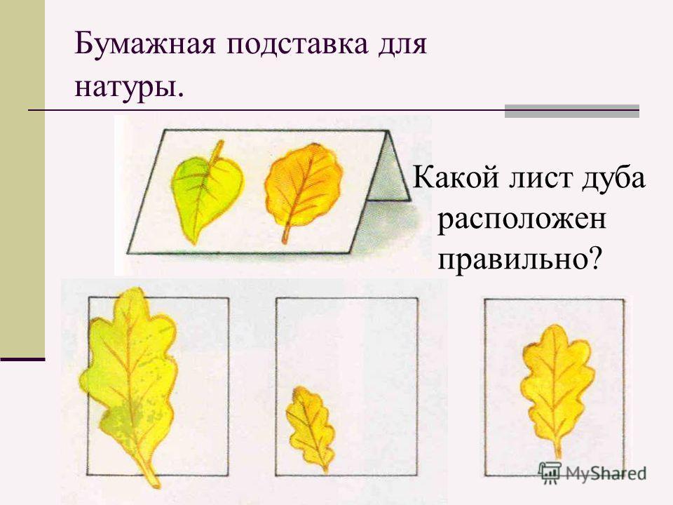 Бумажная подставка для натуры. Какой лист дуба расположен правильно?