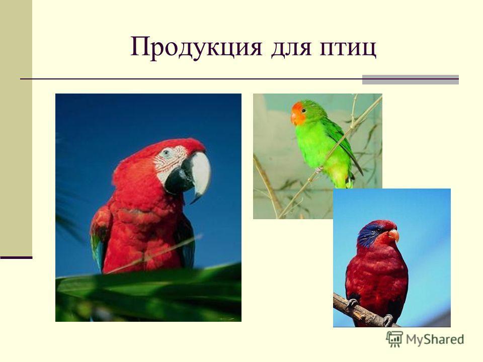 Продукция для птиц