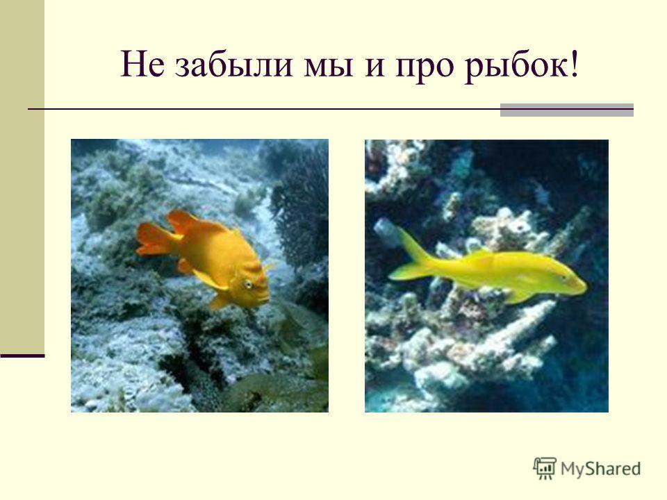 Не забыли мы и про рыбок!