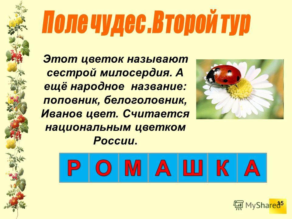 Этот цветок называют сестрой милосердия. А ещё народное название: поповник, белоголовник, Иванов цвет. Считается национальным цветком России. 15