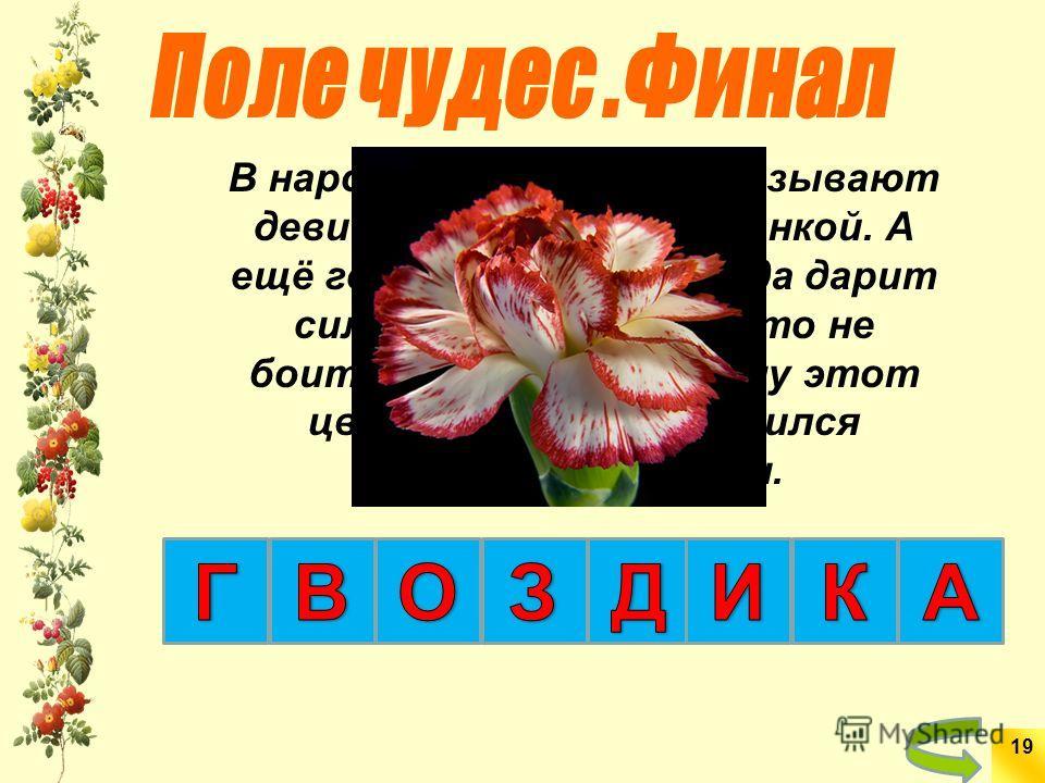 В народе этот цветок называют девичьей красой, горожанкой. А ещё говорят, что природа дарит силу и яркость тем, кто не боится невзгод. Поэтому этот цветок не раз становился символом перемен. 19