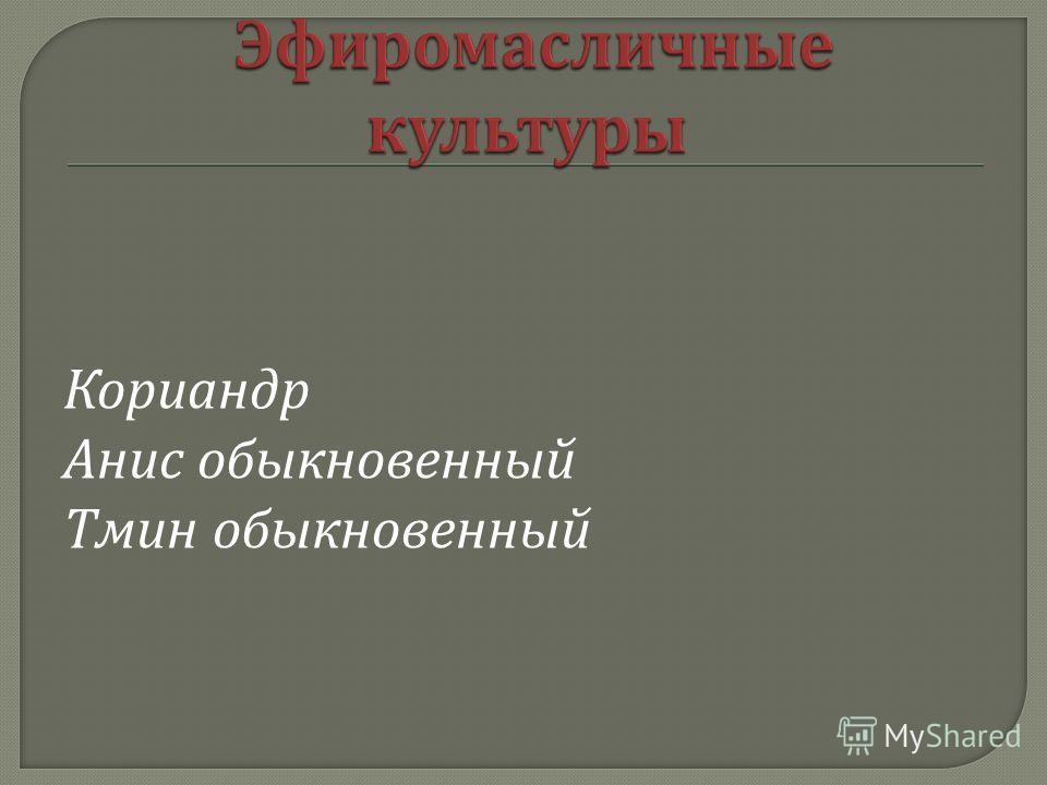 Кориандр Анис обыкновенный Тмин обыкновенный