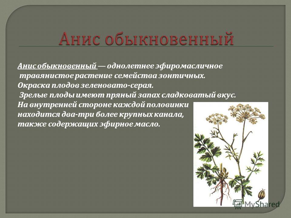 Анис обыкновенный однолетнее эфиромасличное травянистое растение семейства зонтичных. Окраска плодов зеленовато - серая. Зрелые плоды имеют пряный запах сладковатый вкус. На внутренней стороне каждой половинки находится два - три более крупных канала